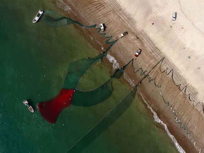 Hình Ảnh Một Kĩ Thuật Đánh Bắt Cá Ở Fujairag, Uae. Trong Khi Những Chú Cá  Đang Tìm Cách Trốn Thoát Thì Đàn Chim Biển Đang Chờ Cơ Hội Để Kiếm Thức ...
