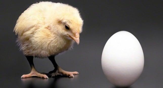 Trứng có trước hay gà có trước? Dưới đây là đáp án chính xác