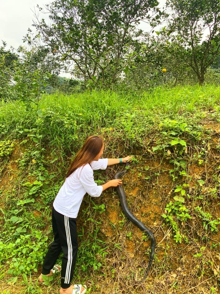 Con rắn có chiều dài khoảng 1m40 và nặng gần 2kg.