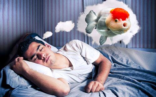 Giấc mơ về cá mang lại may mắn
