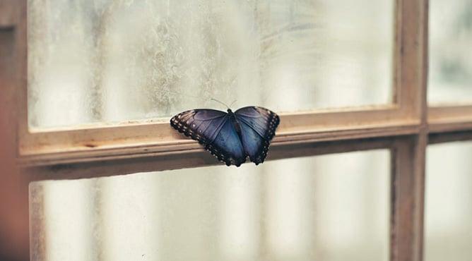 Thấy bướm bay vào nhà