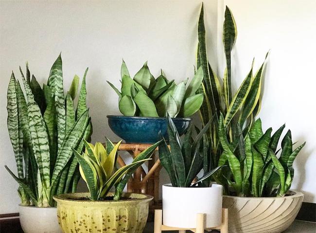 Không trồng cây có gai nhọn hình sắc nhọn trong nhà