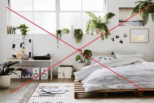 Không trồng cây xanh trong phòng ngủ