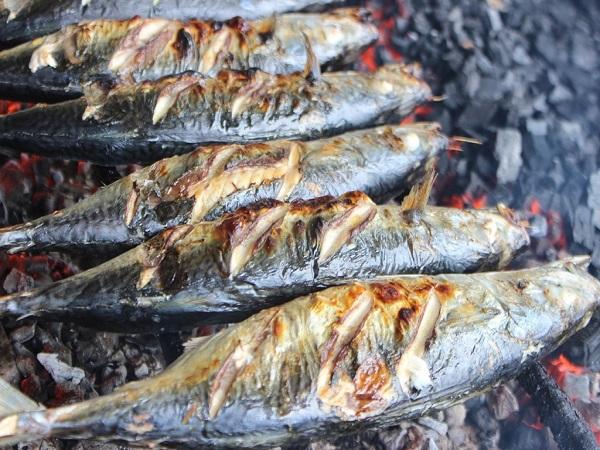 8-loai-ca-giau-omega-3-03