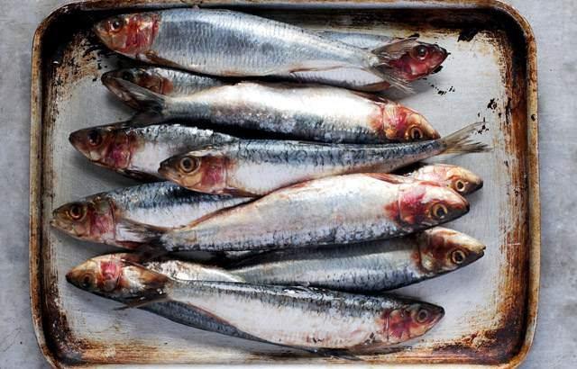 8-loai-ca-giau-omega-3-04