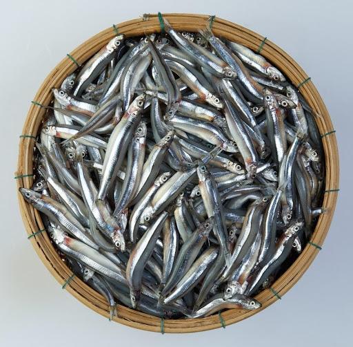 8-loai-ca-giau-omega-3-05