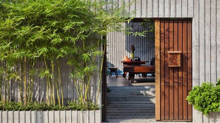 Cây tre hay trúc trồng trước nhà tốt cho phong thủy