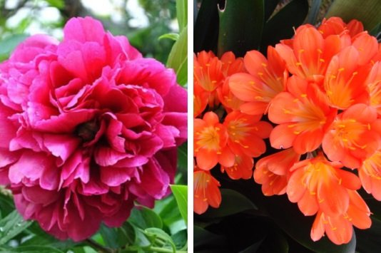Trồng những loại hoa này trong nhà giúp mang đến phú quý cho gia chủ