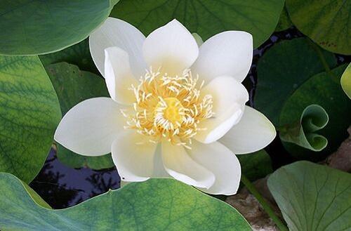 Song-hanh-phuc-hon-voi-10-nghiep-lanh-cua-dao-Phat-phan-2