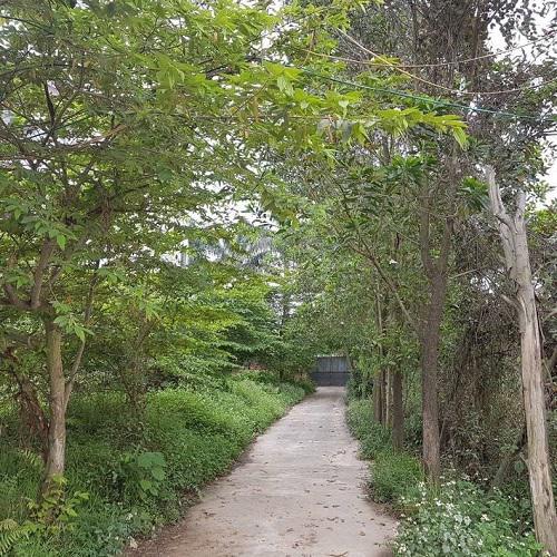 Nằm giữa cánh đồng, phía trước có vài nóc nhà thưa thớt, sau lưng là cả một bãi tha ma, nhưng dường như không gian sống của nghệ sĩ Giang còi thực sự trong lành và ấm áp bởi một màu xanh, dịu mát.