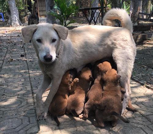 Những chú chó này đều được các con nghệ sĩ Giang còi đặt tên để nhận diện và gọi thân mật.