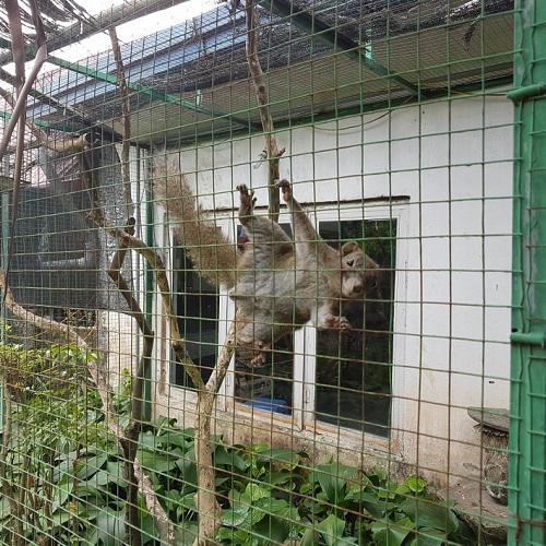Những chú sóc tinh nghịch nhảy nhót khi có khách ghé chơi