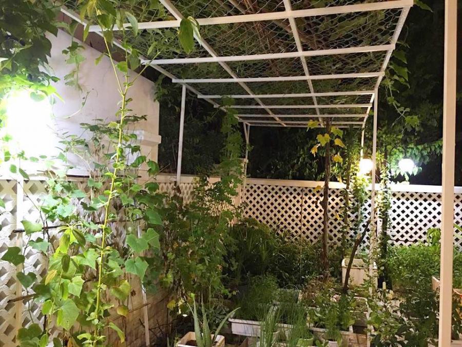 Vườn rau thu nhỏ của nhà Thủy Tiên với đầy đủ các loại rau xanh mướt phục vụ nhu cầu thực phẩm sạch hàng ngày cho gia đình.