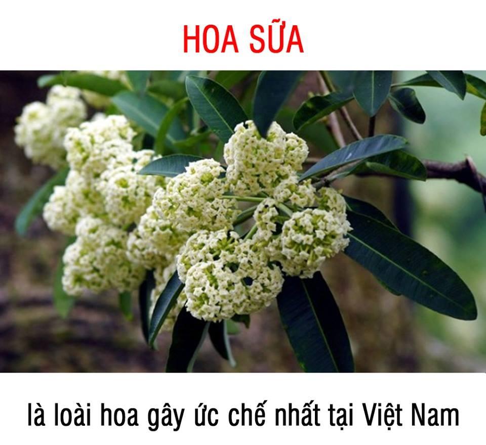 anh-che-hoa-sua-9