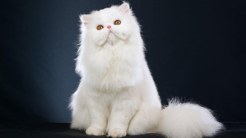 Chọn một chú mèo yêu thích nhất để biết bạn là người thế nào trong mắt người khác