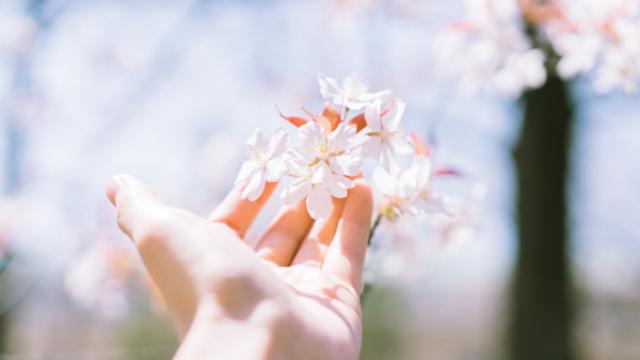 Tâm biết buông bỏ thì đời mới nở hoa, lòng không còn nặng nề thì thân thể mới tự tại