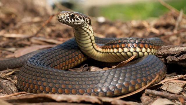 moth-balls-keep-snakes-away-d731c368d3991a0e-1477394764390