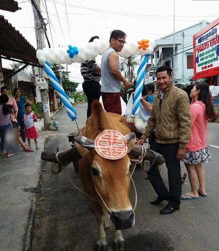 Đội phù rể hot boy cưỡi bò trong đám hỏi gây sốt cộng đồng mạng