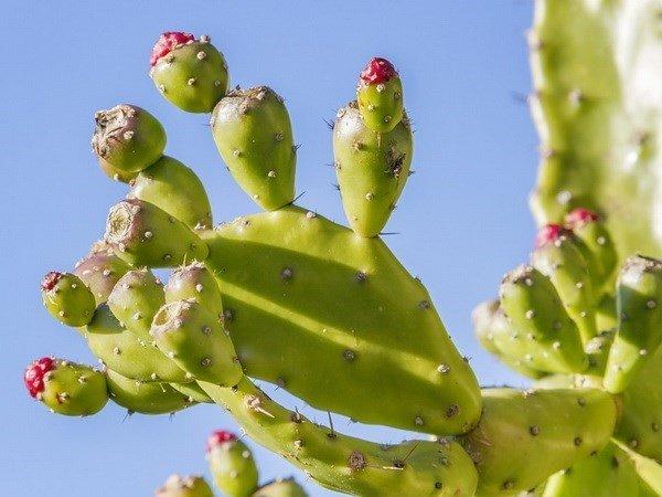 '. Loại cây là thần dược giúp gia đình cả năm không ốm đau bệnh tật, không trồng là sống uổng một đời .'