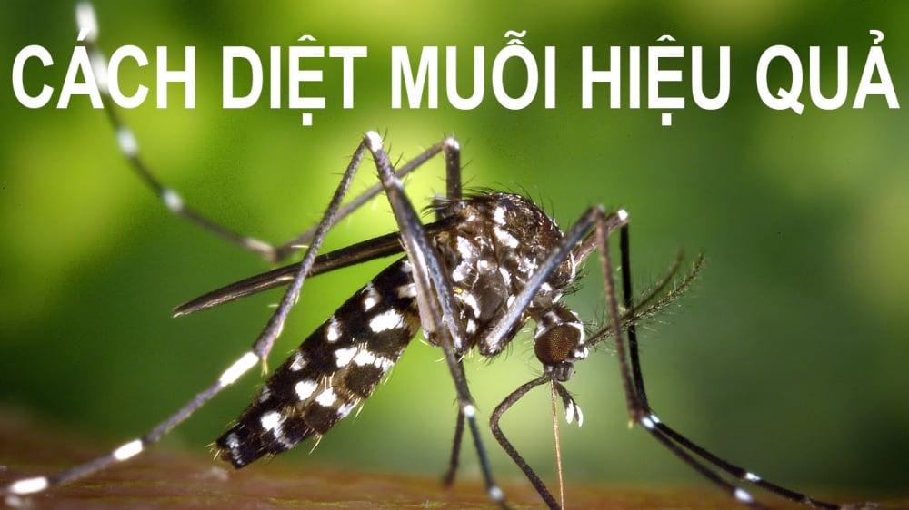 cach-diet-muoi-hieu-qua