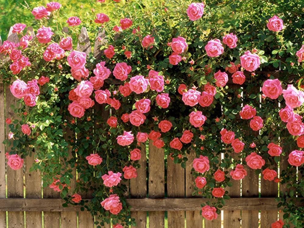 Top 6 loài hoa đẹp dễ trồng trong mùa thu đông trong vườn nhà bạn 2