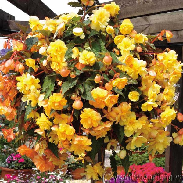 Top 6 loài hoa đẹp dễ trồng trong mùa thu đông trong vườn nhà bạn 5