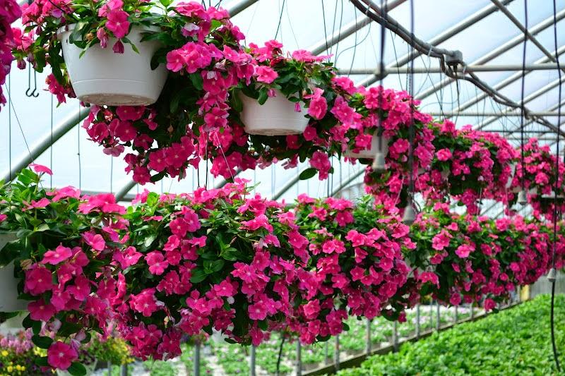 Top 6 loài hoa đẹp dễ trồng trong mùa thu đông trong vườn nhà bạn 12