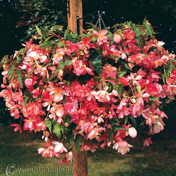 Top 6 loài hoa đẹp dễ trồng trong mùa thu đông trong vườn nhà bạn 4