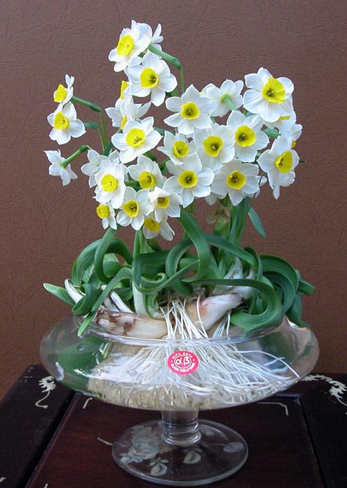 Top 6 loài hoa đẹp dễ trồng trong mùa thu đông trong vườn nhà bạn 6