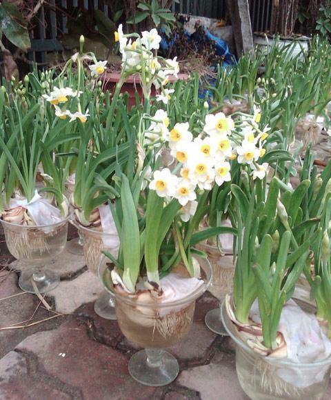 Top 6 loài hoa đẹp dễ trồng trong mùa thu đông trong vườn nhà bạn 7