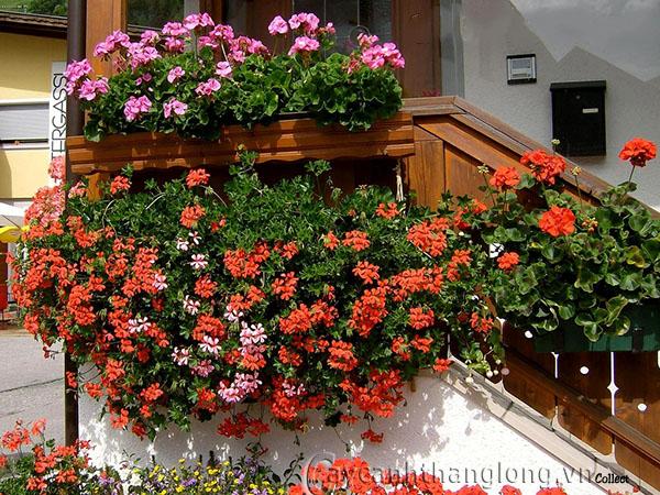 Top 6 loài hoa đẹp dễ trồng trong mùa thu đông trong vườn nhà bạn 8