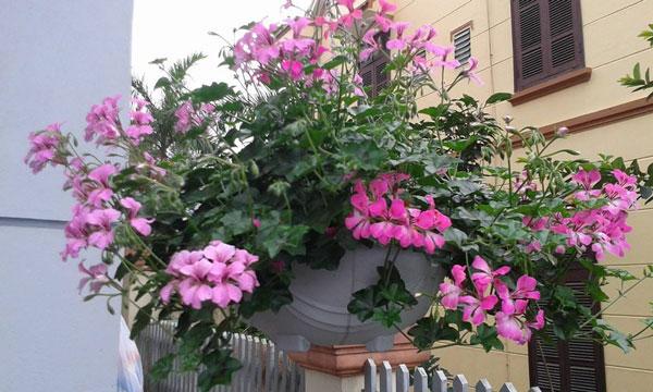 Top 6 loài hoa đẹp dễ trồng trong mùa thu đông trong vườn nhà bạn 9