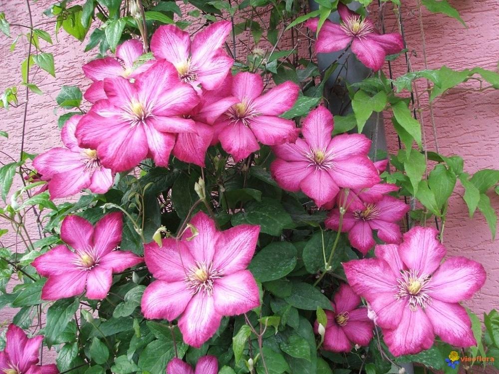 Top 6 loài hoa đẹp dễ trồng trong mùa thu đông trong vườn nhà bạn 10