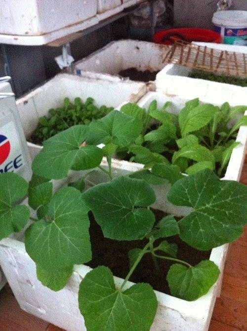 Bất ngờ với vườn rau trên sân thượng tự trồng của các mẹ phố