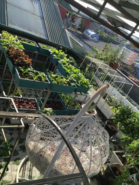 Bất ngờ với vườn rau trên sân thượng tự trồng của các mẹ phố 4