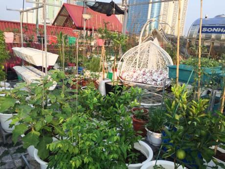 Bất ngờ với vườn rau trên sân thượng tự trồng của các mẹ phố 5