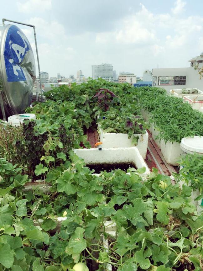 Bất ngờ với vườn rau trên sân thượng tự trồng của các mẹ phố 9