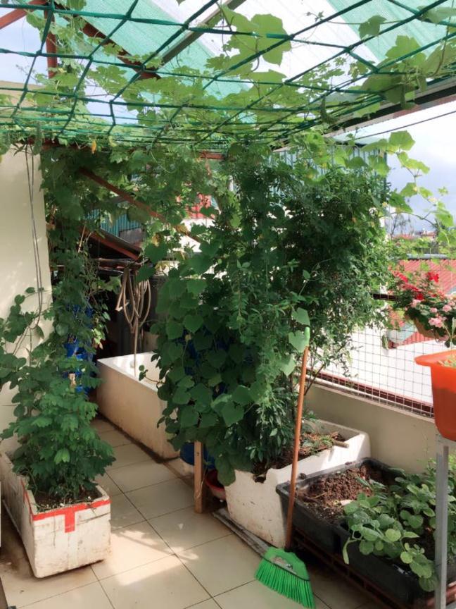 Bất ngờ với vườn rau trên sân thượng tự trồng của các mẹ phố 10