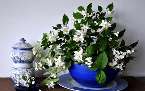2 loài hoa nên trồng trong phòng ngủ rất tốt khuyên bạn nên trồng 2