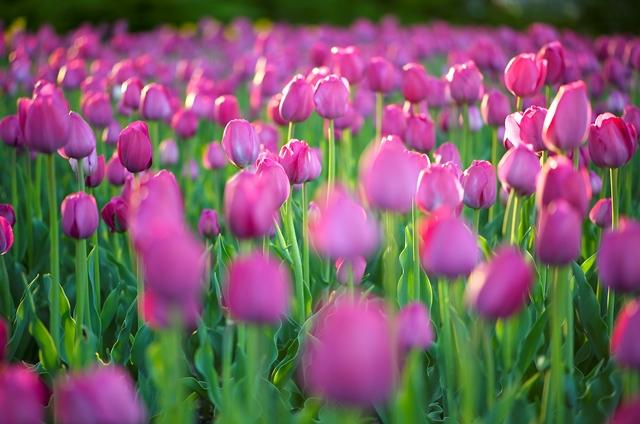 chọn hoa tươi