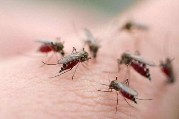 Kết quả hình ảnh cho muỗi đốt