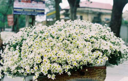 Cách cắm hoa cúc hoạ mi đơn giản mà đẹp 1