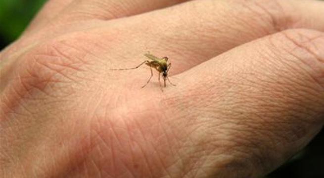Cách đuổi muỗi và chữa muỗi đốt hiệu quả