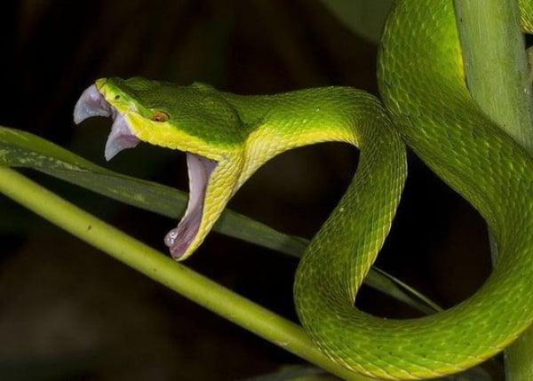 Nằm mơ bị rắn cắn vào chân có điềm gì?