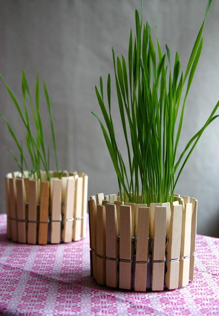 Cách trồng 5 loại cây gia vị hay dùng cho gia đình dễ dàng