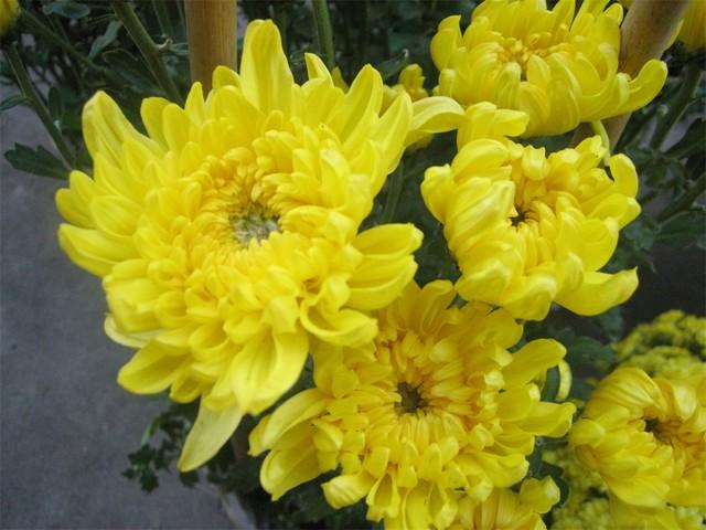 Kết quả hình ảnh cho các loại hoa dùng để thờ cúng