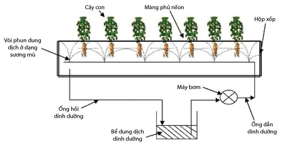 Trồng rau bằng khí canh vừa tiết kiệm không gian, nhanh thu hoạch
